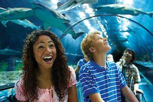 SeaWorld San Diego Fun Card