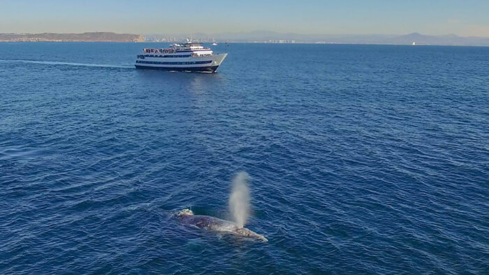 Whale & Dolphin Watching San Diego
