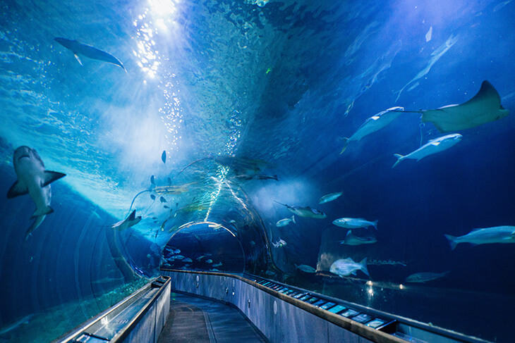 Aquarium of the Bay: General Admission