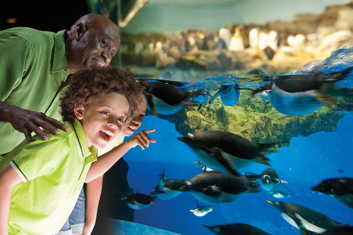 SeaWorld San Diego & Aquatica Length of Stay Combo