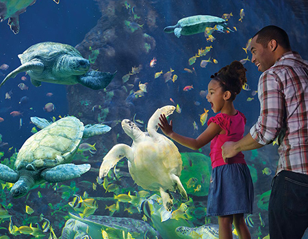 SeaWorld San Diego Single Day + Kids FREE Ticket