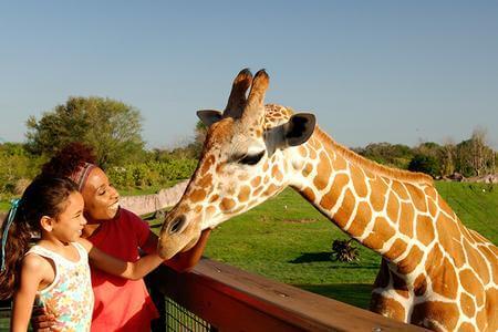 Busch Gardens Tampa - Serengeti Safari Experience