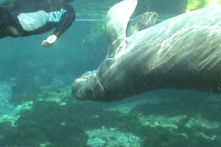 Swim with the Manatees Experience