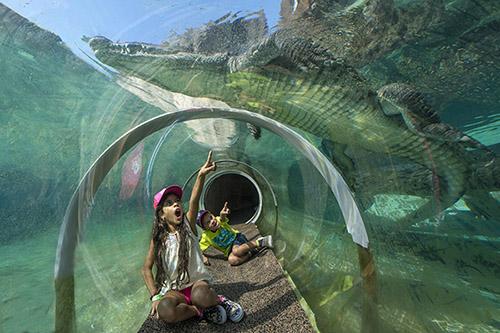 Miami zoo crocodile tube